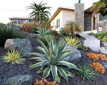 Best Desert Plants to Grow in the Backyard of Vegas Homes